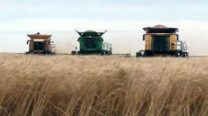 Proceeds of Leduc County harvest donated in effort to end world hunger (01:53)