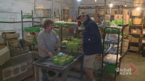 N.B. farmers anxious as they get ready for hurricane Dorian's arrival