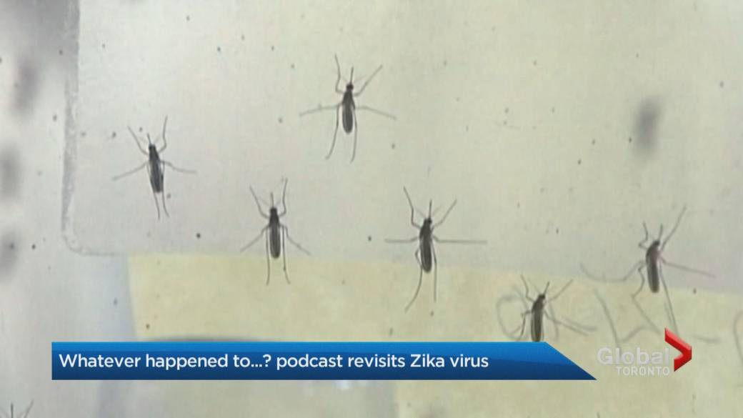Click to play video: 'Whatever happened to… the Zika epidemic?'