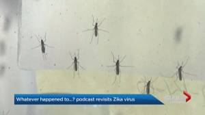 Whatever happened to… the Zika epidemic? (02:12)