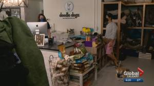 Calgary independent businesses buck trend to open, expand during Covid pandemic (01:37)