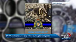RCMP service dog killed in line of duty during northern Alberta manhunt (01:38)