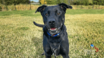 Adopt a Pet: Tucker the dog