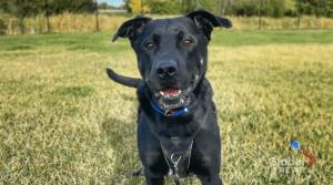Adopt a Pet: Tucker the dog (04:08)