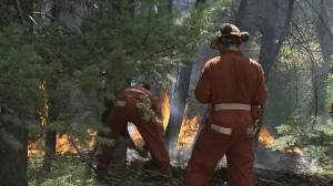 COVID-19 changes forest fire fighting in B.C.