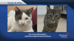 Global Peterborough Shelter Pet Project for July 2, 2021 (02:22)