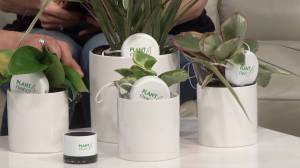 Kingston company gives a musical voice to plants