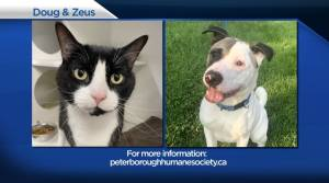 Global Peterborough's Shelter Pet Project for Sept. 3, 2021 (02:59)