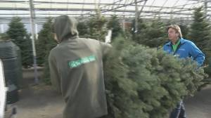 Christmas tree lots reporting shortages