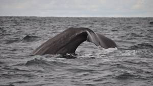 U.S.-Norwegian whale study triggers wave of backlash (02:11)