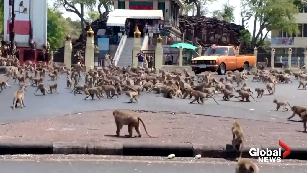Thai elephants freed from tourist labour amid coronavirus lockdown