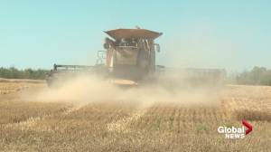 Farmers call on Alberta to back federal AgriStability program upgrade (01:53)