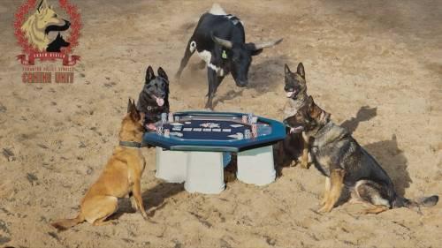 Calendars support EPS Canine Unit | Watch News Videos Online