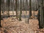 City council approves Longueuil deer cull