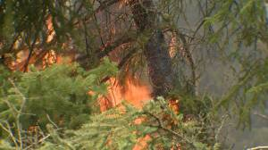 'One of the highest counts in last 10 years': Sask. reports 161 active fires (01:29)