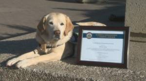 Lethbridge Corridor Victim Services dog receives provincial recognition