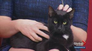 Calgary Animal Services Pet of the Week: Julio