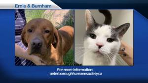 Global Peterborough's Shelter Pet Project for June 11, 2021 (02:10)