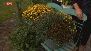 Spruce It Up Patio: Fabulous fall colours