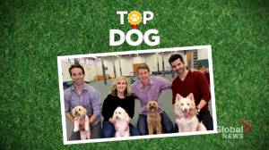 Whose pooch is the 'Top Dog' at Global News?