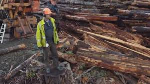 'Big Timber': An inside look into the high-stakes logging industry (03:04)