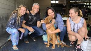 Golden Rescue dog Nilo and his humans visit GNM