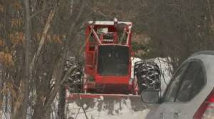 Île-Perrot residents want municipal government to stop clearcutting of white oak forest (01:54)