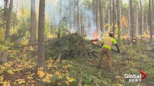 Westbank First Nation has treated more than 400 hectares of forested land in an effort to reduce the risk of wildfire