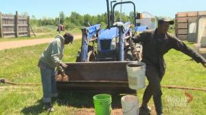 New Brunswick farmers say there is still hope for the season