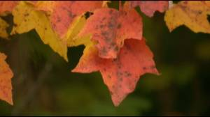 Fall Colours Peak  over the Thanksgiving Weekend in Eastern Ontario (02:34)
