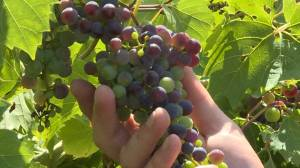 Federal government invests in multiple central Ontario wineries and breweries