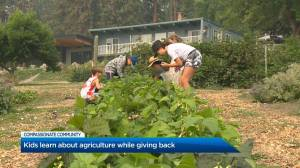 Kids learn value of agriculture and compassion at Okanagan summer camp (01:34)