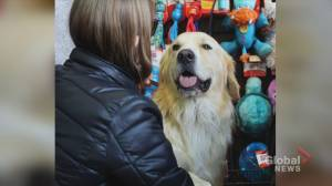 Heaven Can Wait introduces Calgary to an adorable adoptable (03:47)