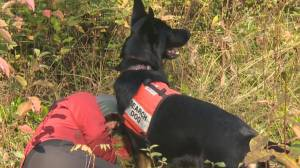 Search dogs join Okanagan search and rescue crews to potentially help save lives