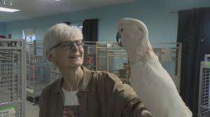B.C. bird sanctuary that rescued 100s of parrots struggling