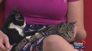 Calgary Animal Services Pet of the Week: Adorable kittens