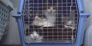 143 cats seized from Edmonton-area home (04:07)