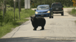 Ask an Expert: Bear Safety