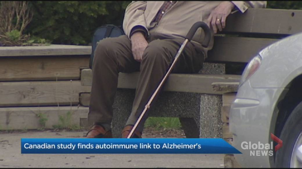 Click to play video: 'Canadian study explores link between Alzheimer's and auto immunity'
