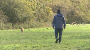 New study says dog ownership helps heart health