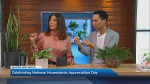 Celebrating National Houseplants Appreciation Day