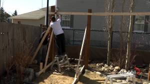 'It's ridiculous': skyrocketing lumber prices shock renovators (01:42)