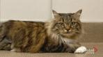 Adopt a Pet: Belladonna the cat