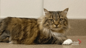 Adopt a Pet: Belladonna the cat (04:10)