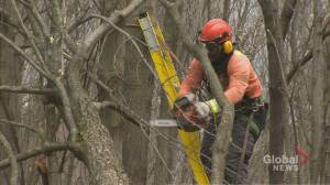 Hydro workers continue to re-energize homes across the province