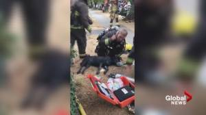 Firefighters praised for recusing  dog from South Vancouver house fire (00:53)