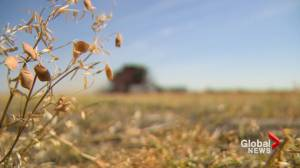 Farm safety concerns elevated as harvest season underway in southern Alberta (02:00)