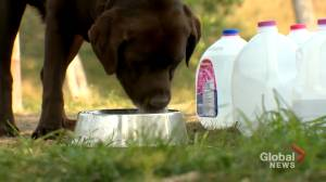 Southwest Calgary dog owners upset after water station ordered closed (01:43)