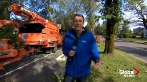 Clean-up crews restoring Halifax after Hurricane Dorian rips through (02:13)
