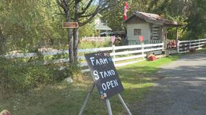 There's no honour among thieves, at least at some farm stands on Vancouver Island